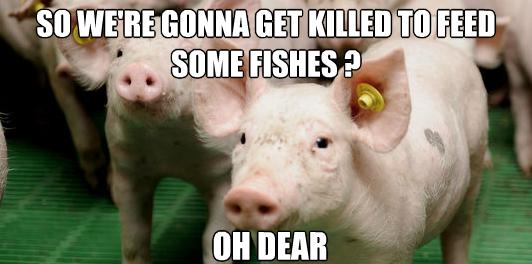 Pigs meme