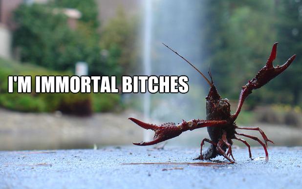 Lobster Meme