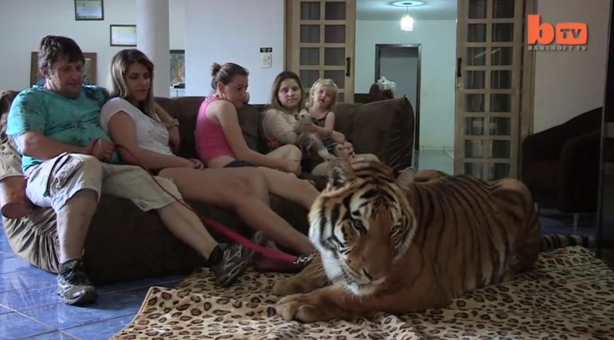 7 tigres la maison yzgeneration for 7 a la maison generique