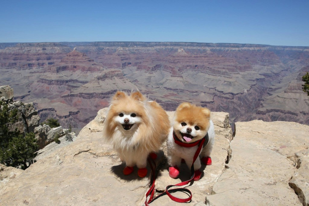 Boo-Buddy-Grand-Canyon