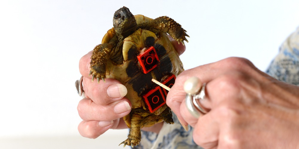 Blade-Tortue-Lego-1