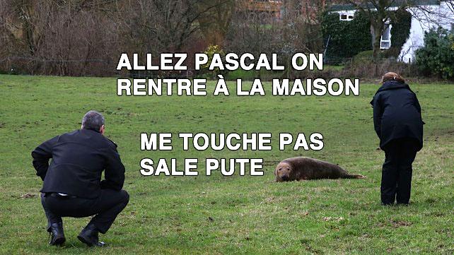 Pascal-Phoque-1