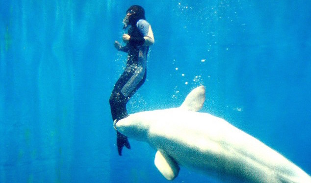 Beluga-Sauve-Vie-Plongeuse-Chine
