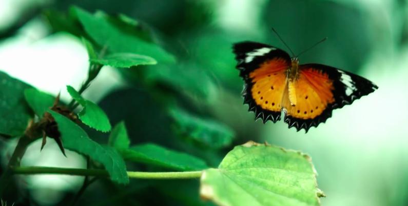 Jonathan-Enfant-Papillon-3