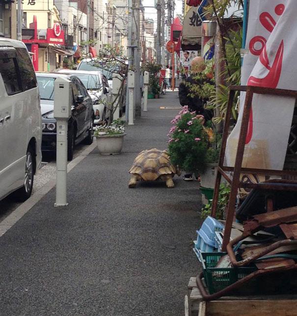 Obaji-Tortue-Geante-Tokyo-2