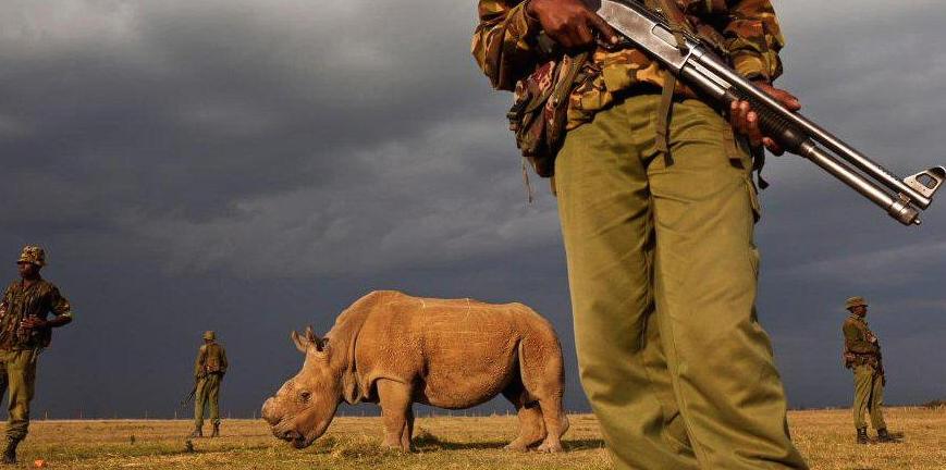 Sudan-Dernier-Rhinoceros-Blanc-2