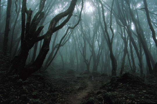 Aokigahara-Foret-Suicides-1