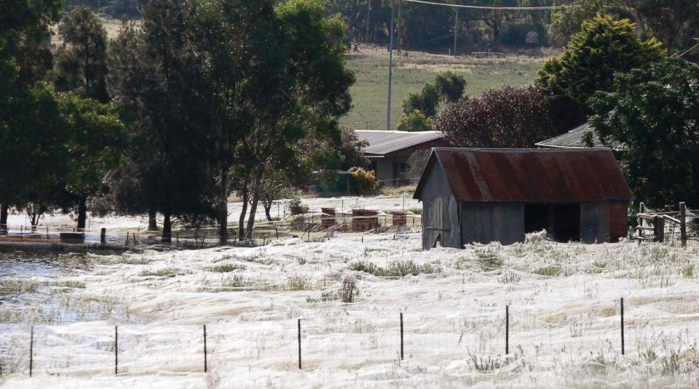 Pluie-Araignees-Australie-2