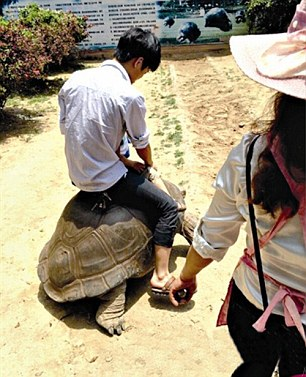 Zoo Keeper Fired For Allowing Rides on Tortoises