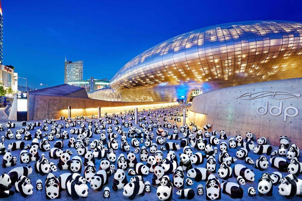 1600-Pandas-Coree-Sud-1