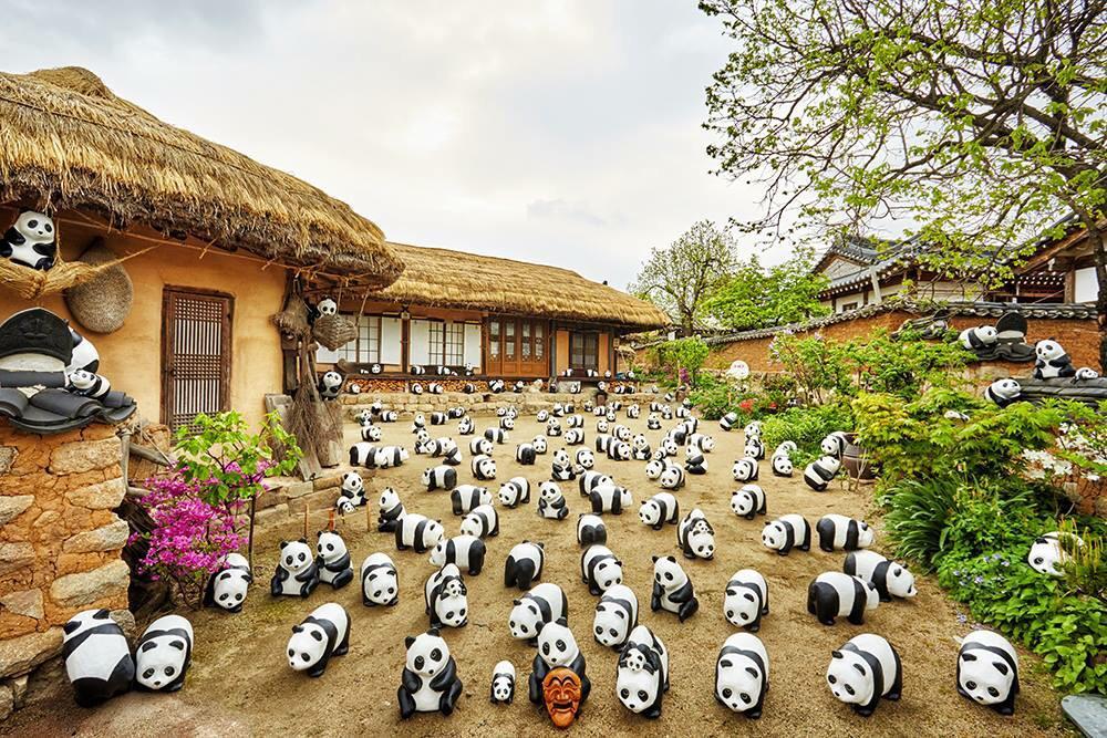 1600-Pandas-Coree-Sud-10