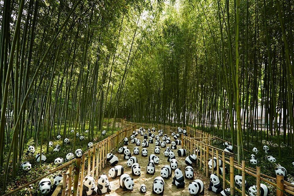 1600-Pandas-Coree-Sud-11