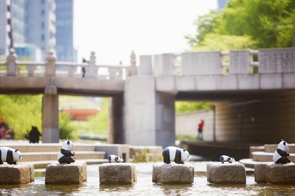 1600-Pandas-Coree-Sud-12