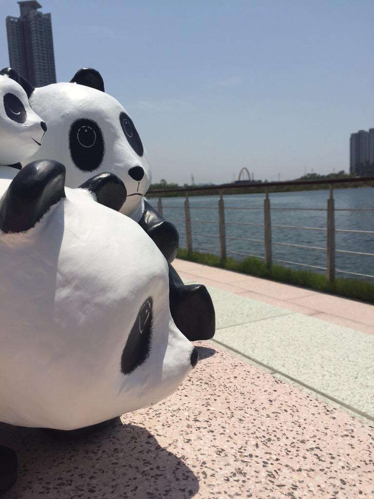 1600-Pandas-Coree-Sud-3