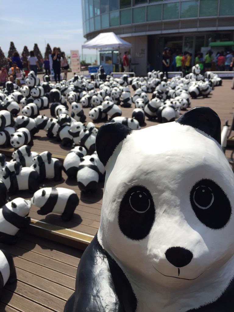 1600-Pandas-Coree-Sud-7