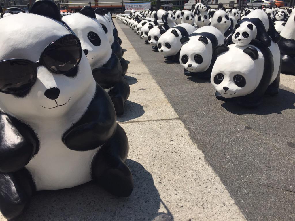 1600-Pandas-Coree-Sud-9