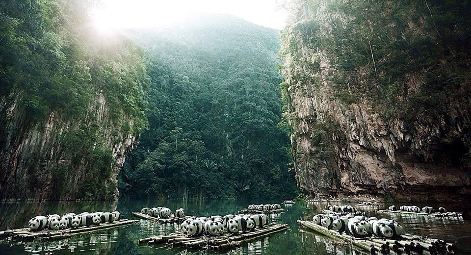 1600-Pandas-Malaisie-2