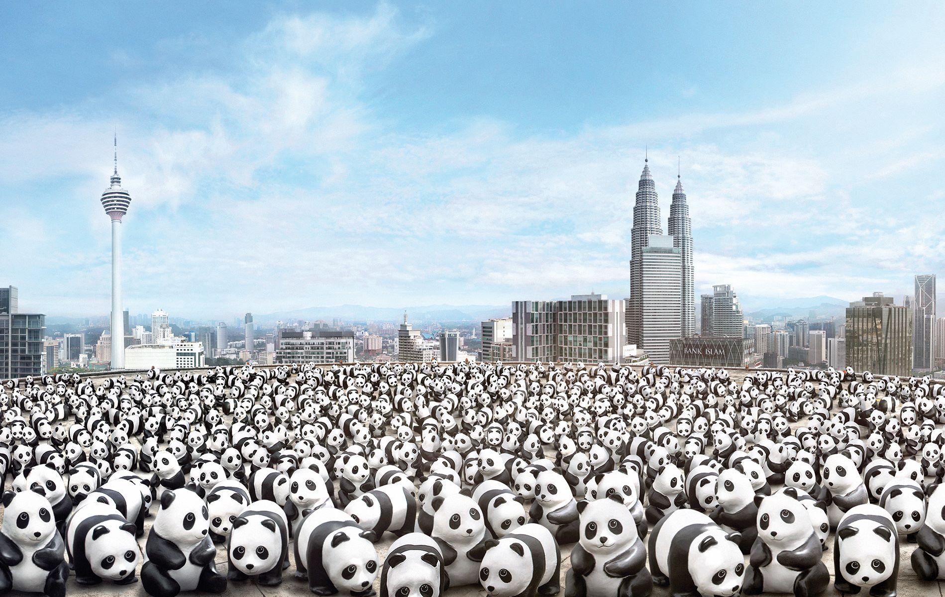 1600-Pandas-Malaisie-3
