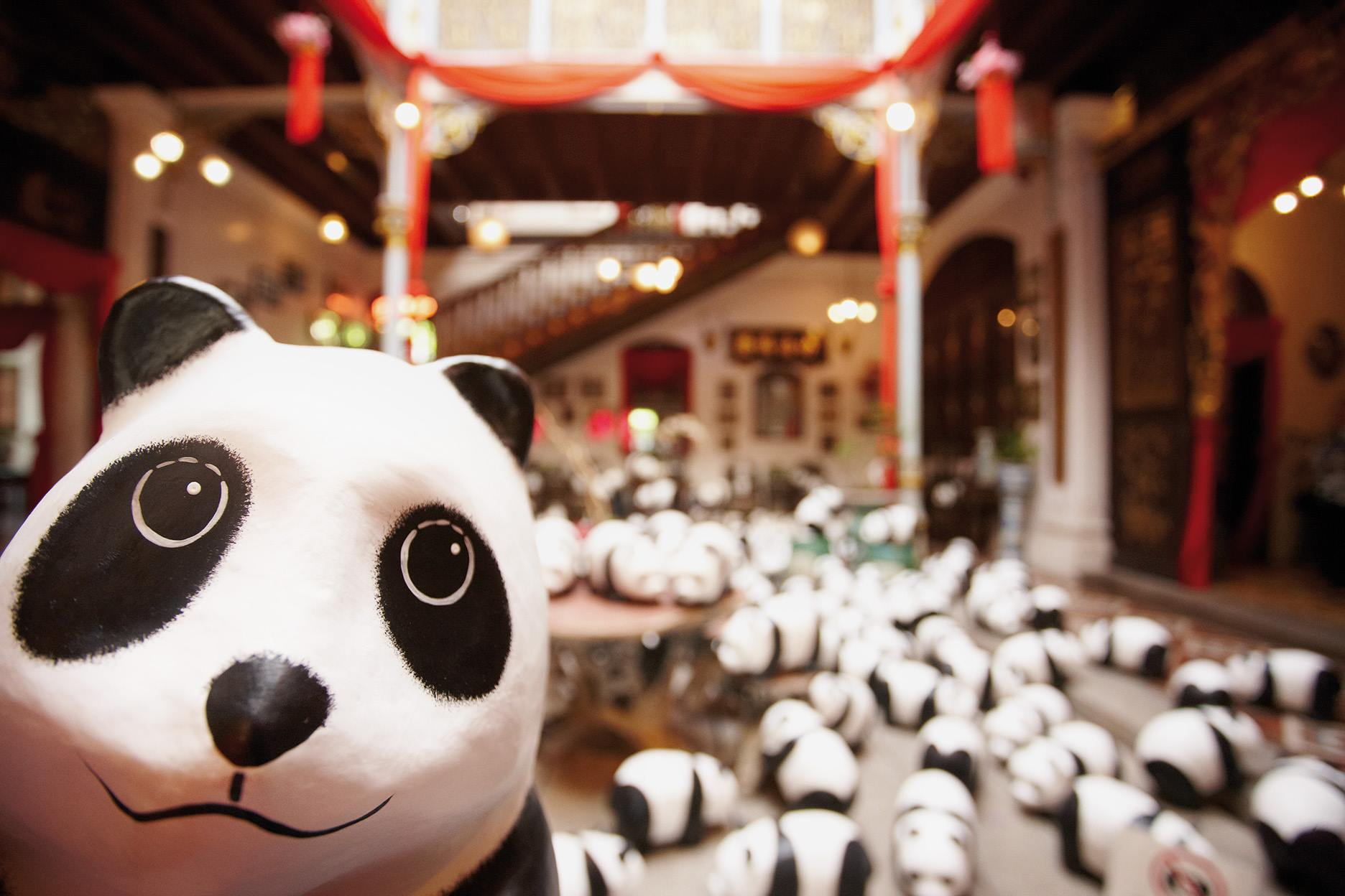 1600-Pandas-Malaisie-4