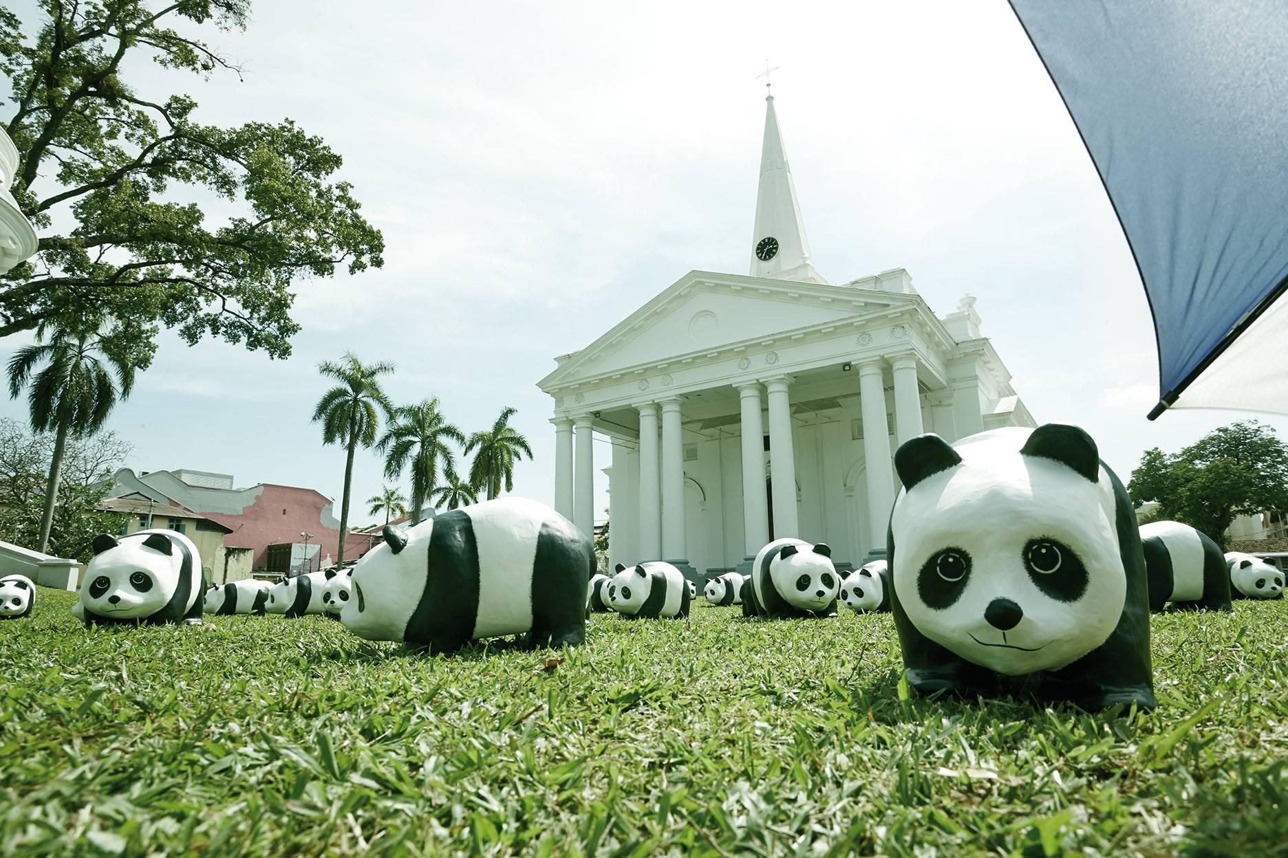 1600-Pandas-Malaisie-6