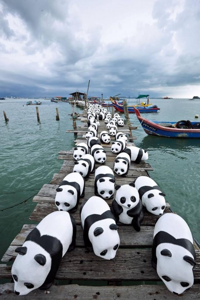 1600-Pandas-Malaisie-7
