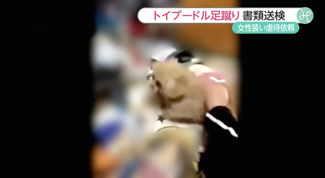 Maltraitance-Chien-Japon-Video-2-Bis