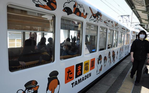 Tama-Chat-Gare-Japon-4