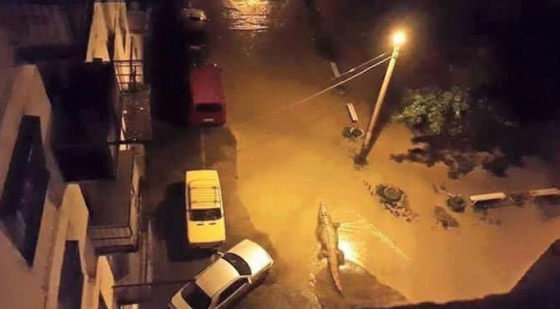 Tbilissi-Inondations-Zoo-Georgie-10