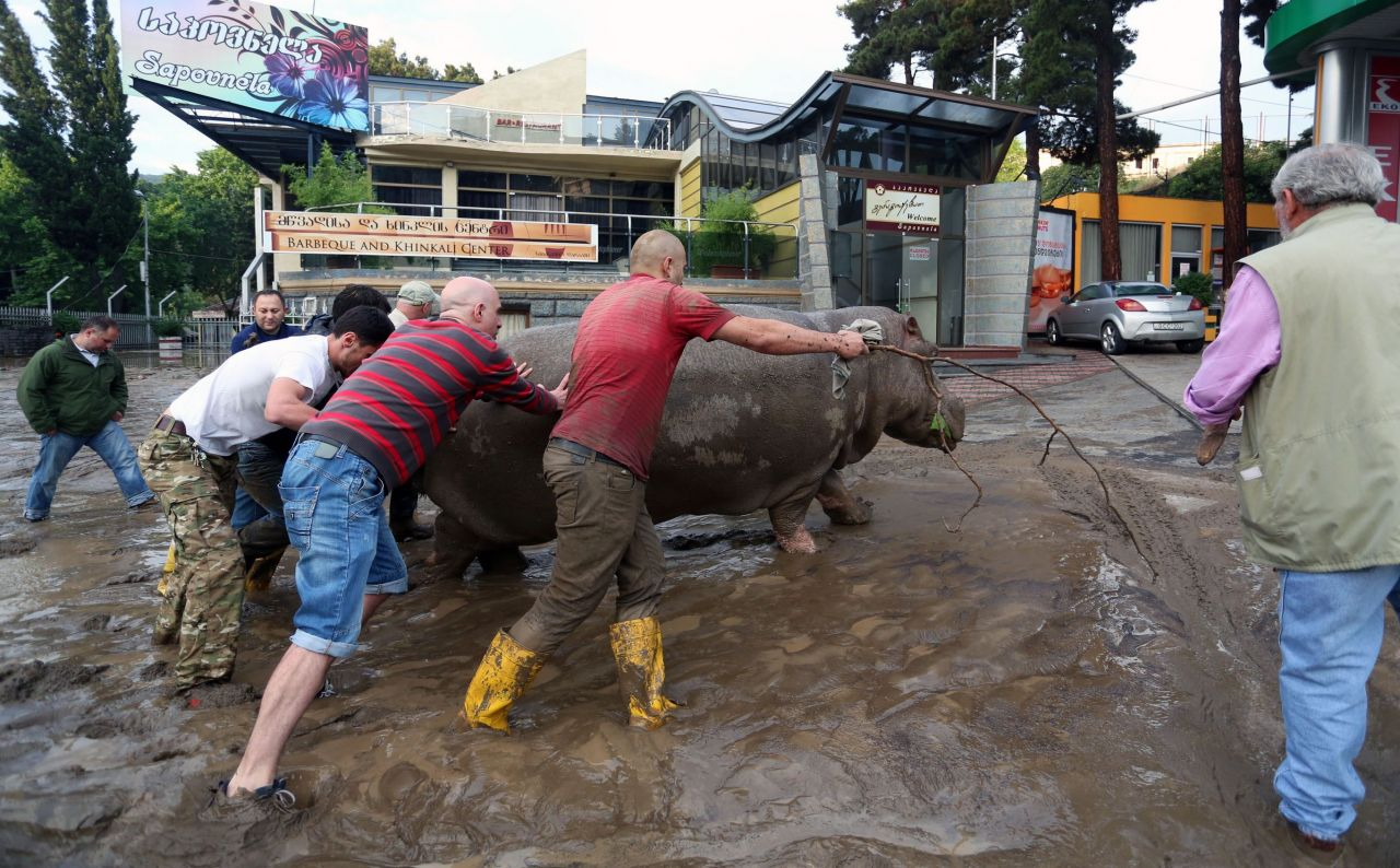 Tbilissi-Inondations-Zoo-Georgie-11