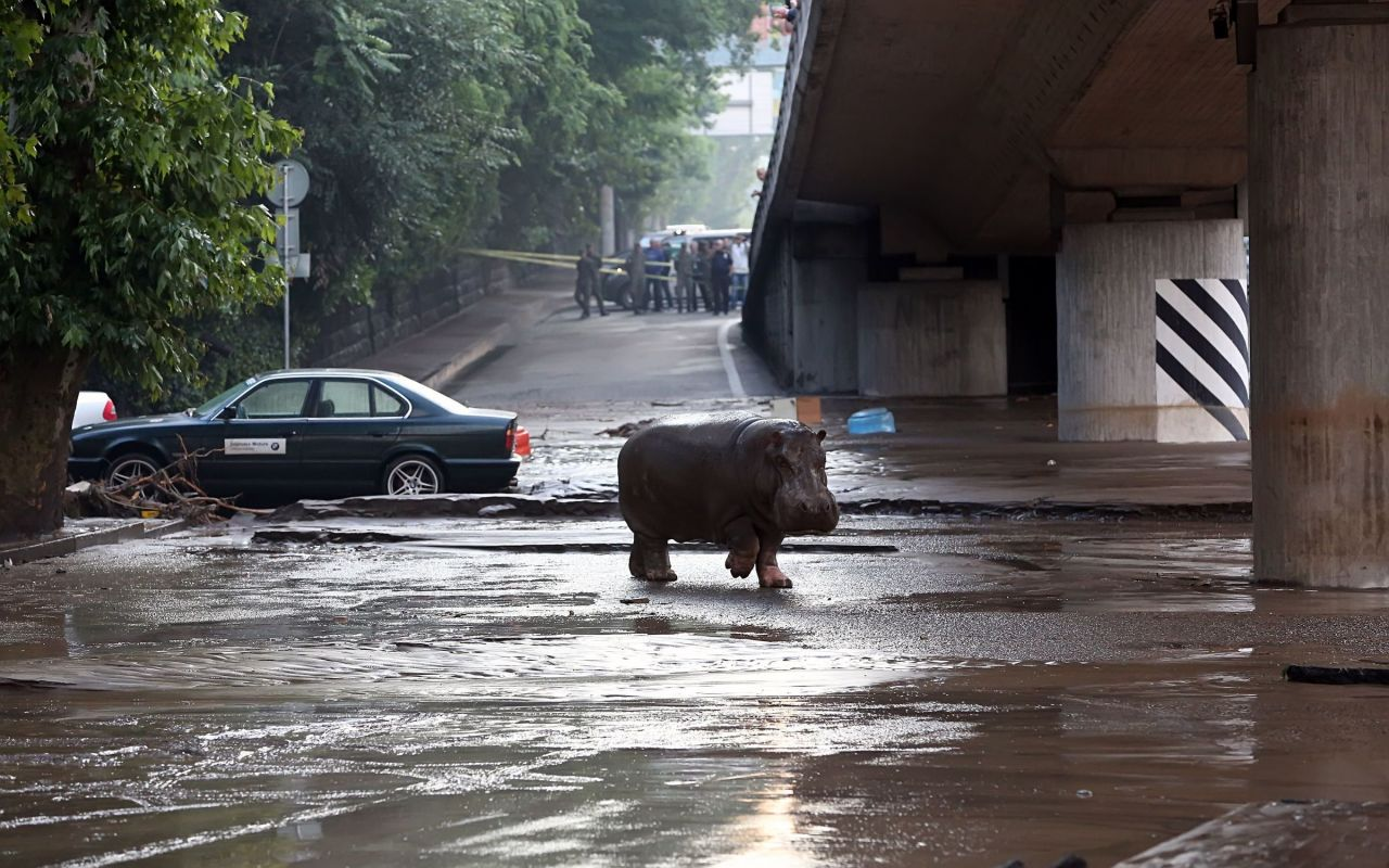 Tbilissi-Inondations-Zoo-Georgie-13