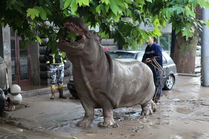 Tbilissi-Inondations-Zoo-Georgie-14