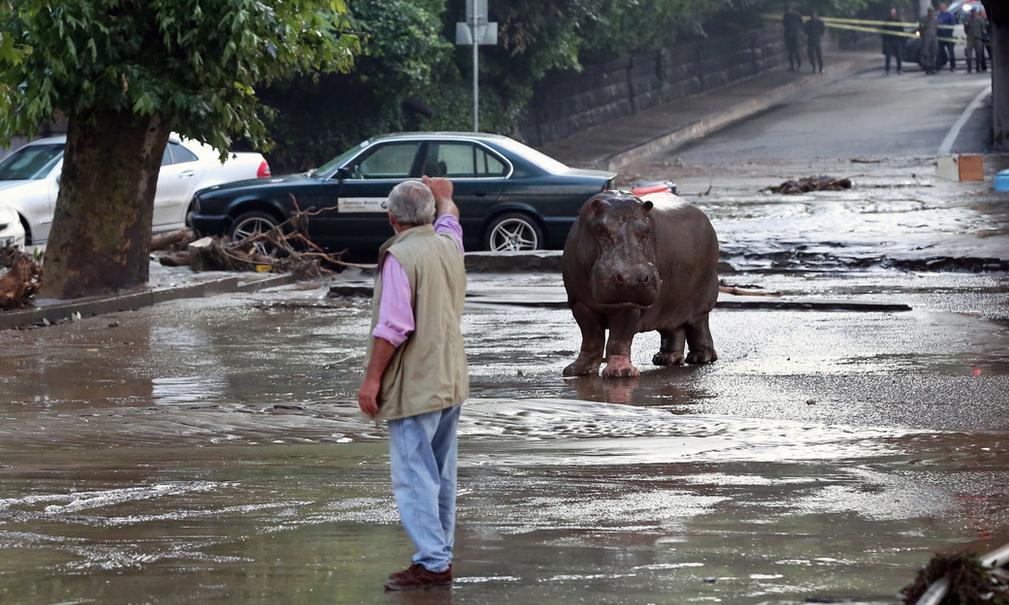 Tbilissi-Inondations-Zoo-Georgie-4