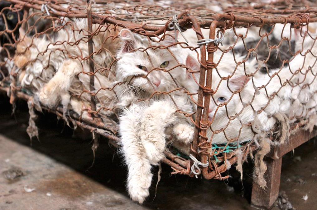 Yulin 2015 : Cette dégustation annuelle de Chiens qui ...