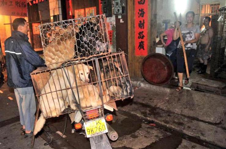 Yulin-Festival-Degustation-Chien-Petition-2