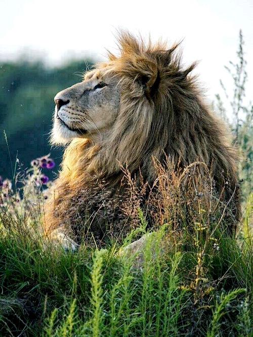 Cecil-Lionceaux-5