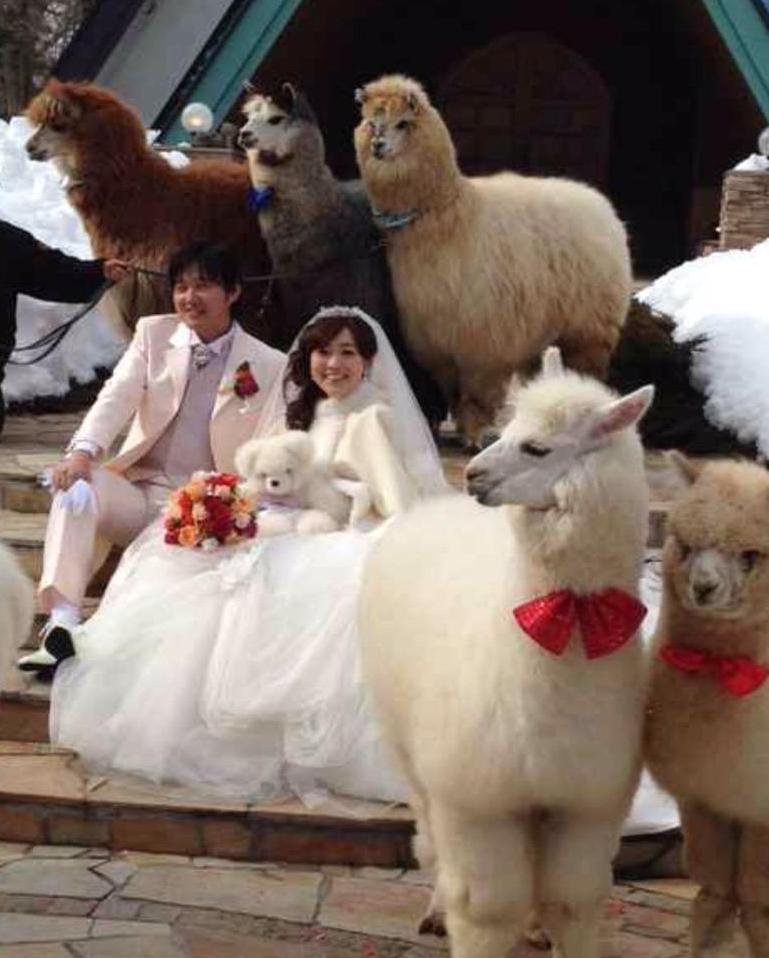 Japon-Mariage-Alpaca-4