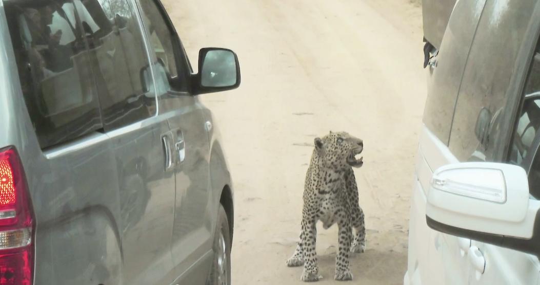 Leopard-Attaque-Guide-1