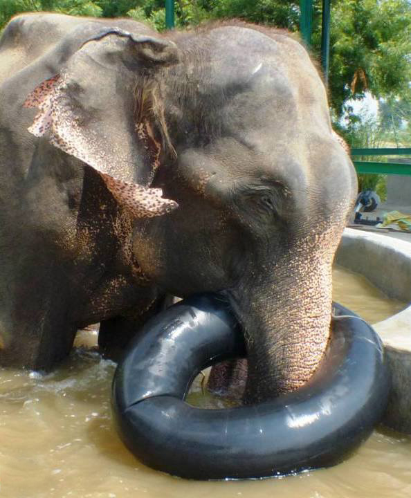 Raju-Elephant-1-An-Liberte-1
