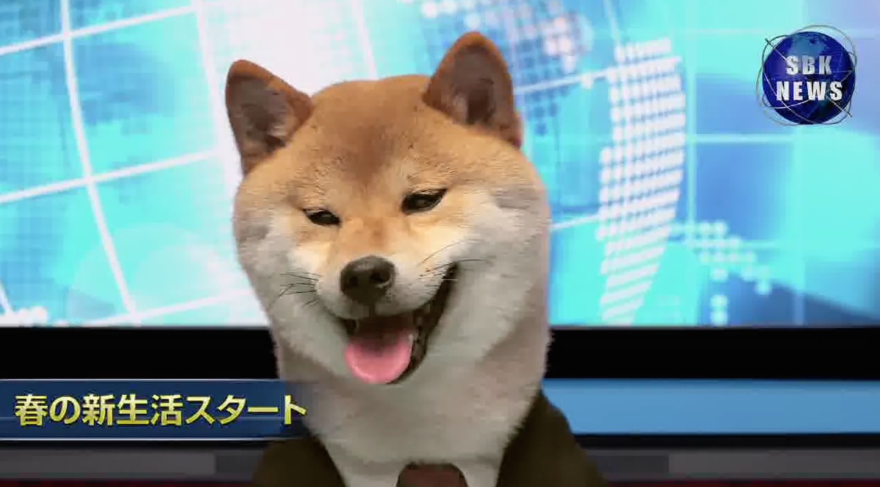 Shibao-Inuyama-Chien-Presentateur-TV-1