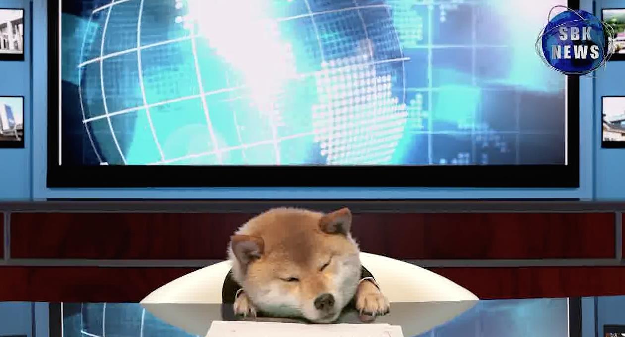 Shibao-Inuyama-Chien-Presentateur-TV-2