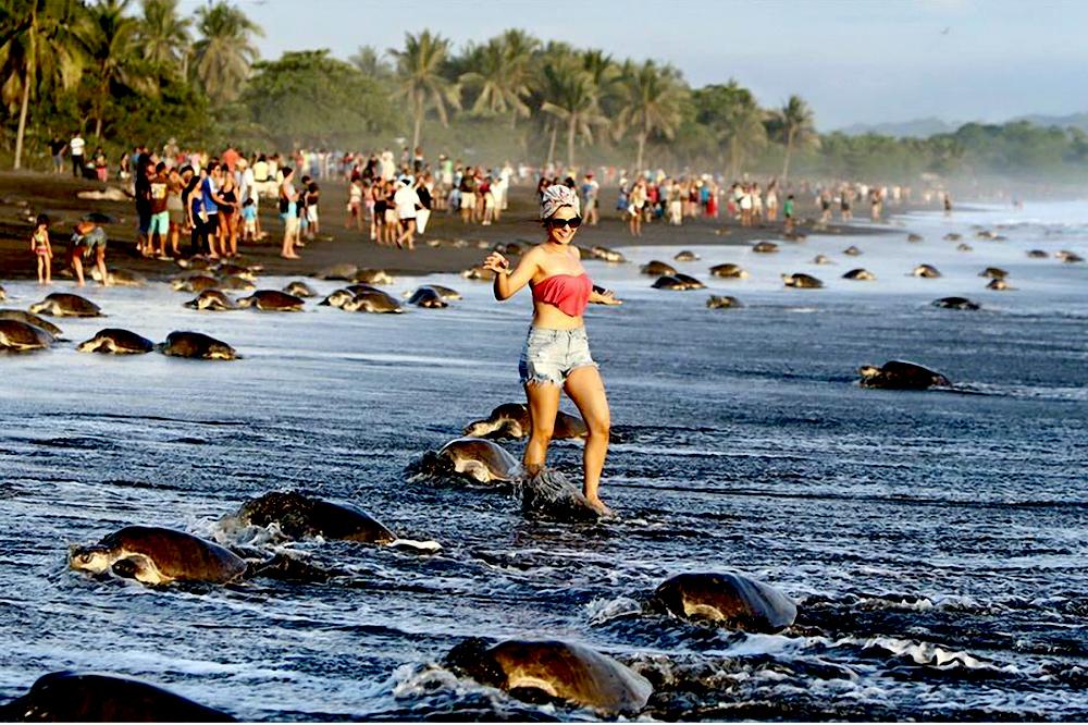 Costa-Rica-Touristes-Tortues-1