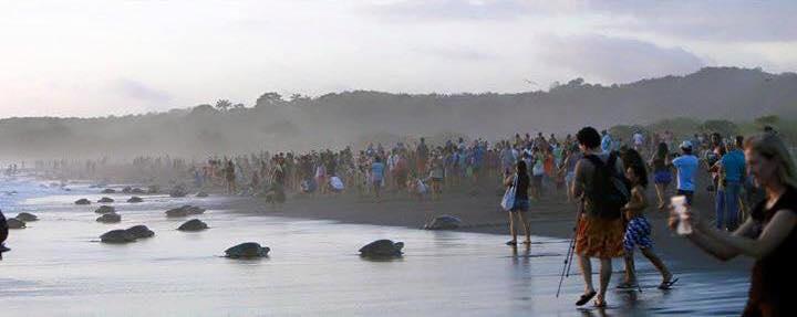 Costa-Rica-Touristes-Tortues-2-Bis