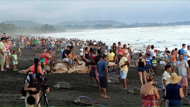 Costa-Rica-Touristes-Tortues-4