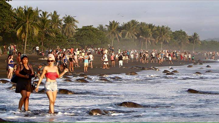 Costa-Rica-Touristes-Tortues-5