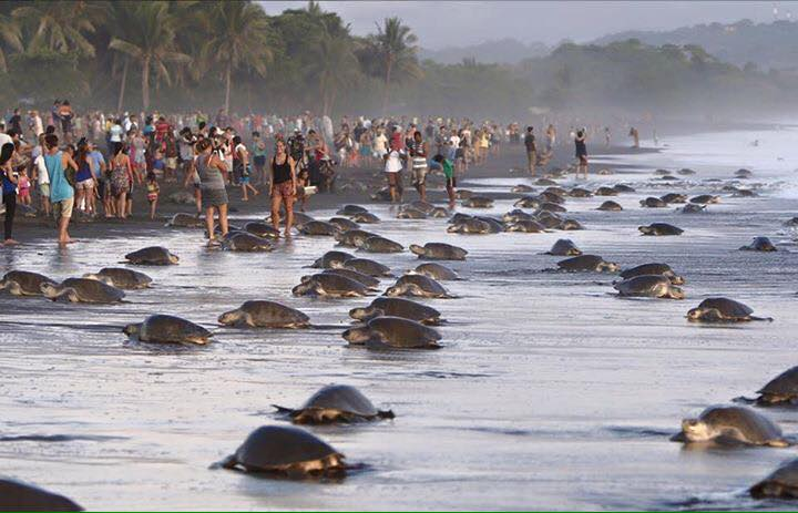 Costa-Rica-Touristes-Tortues-6