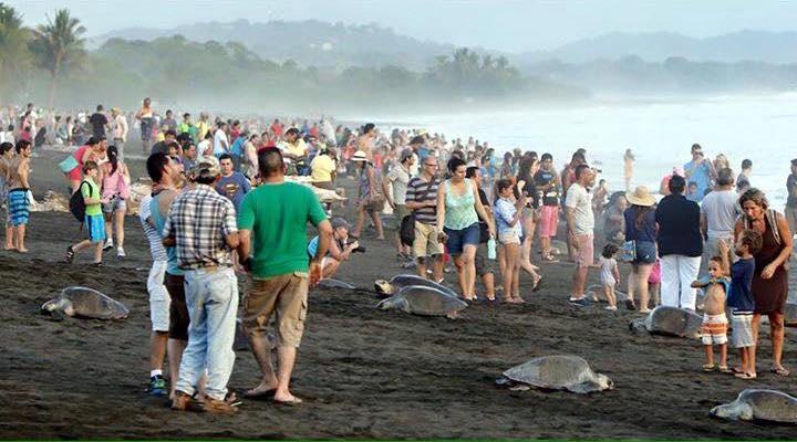 Costa-Rica-Touristes-Tortues-7-Bis