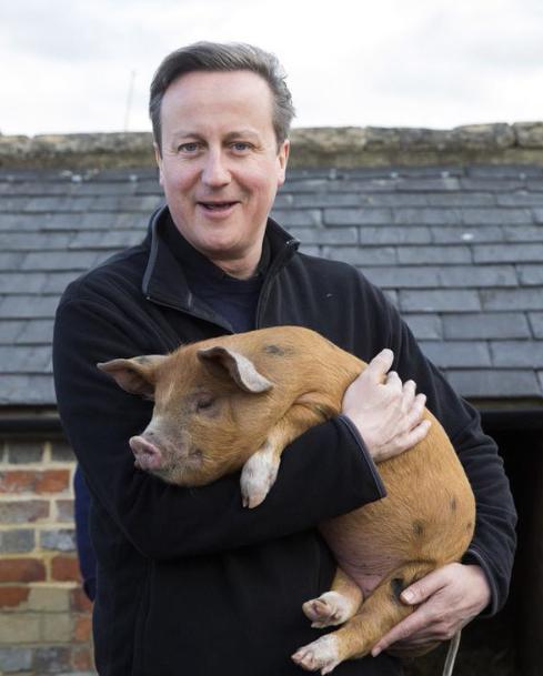 David-Cameron-Cochon-Pig-Gate-1