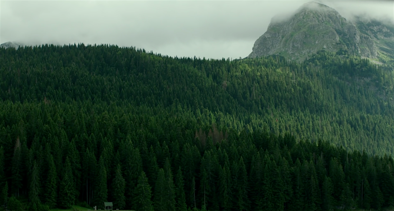 The-Forest-Trailer-1
