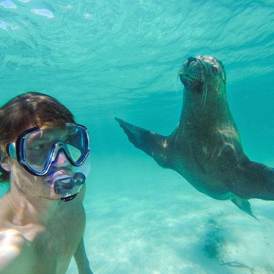 Allan-Dixon-Selfies-Animaux-4