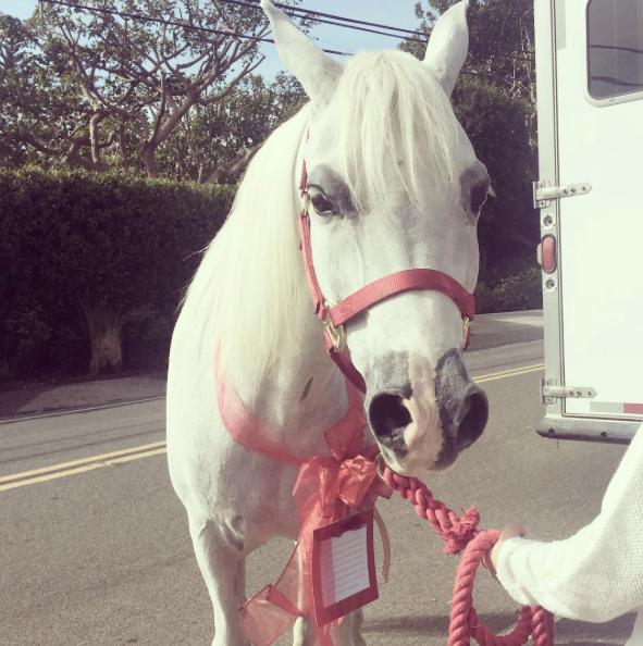 lady gaga white angel cheval 1 - Cadeau Cheval